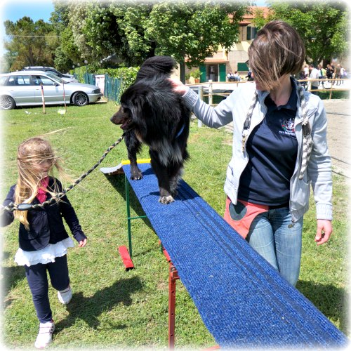 pet therapy macerata