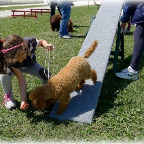 pet therapy macerata