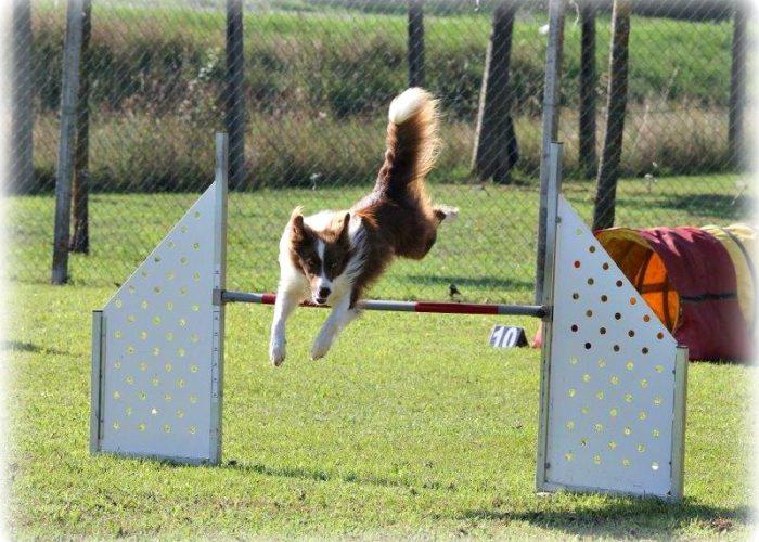 Agility dog macerata colmurano