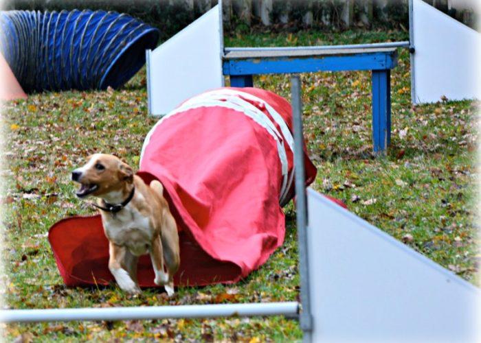 agility dog macerata colmurano rosso