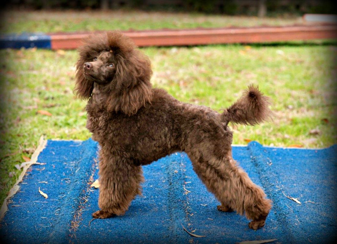 love your dog colmurano